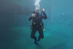 diver-r2